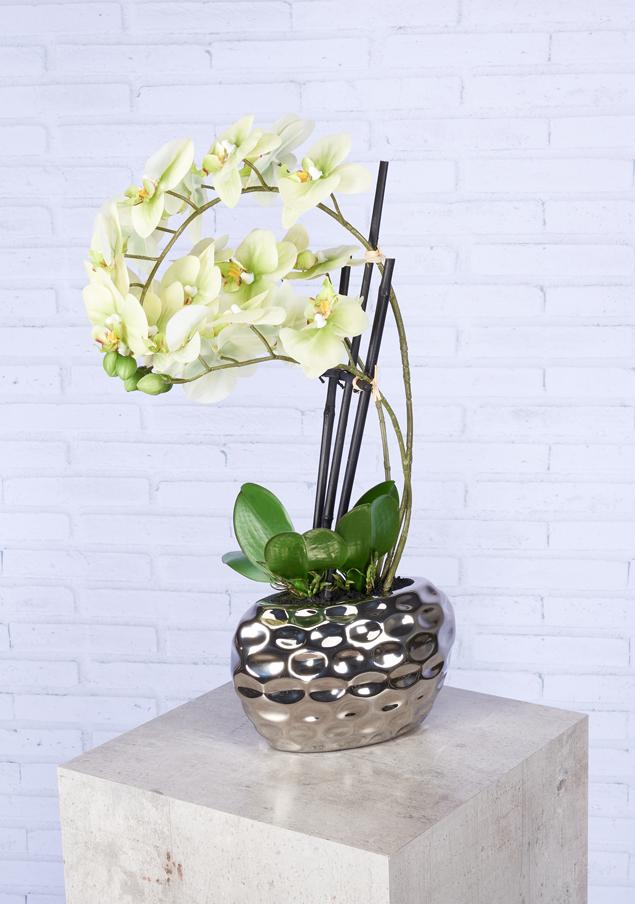 Gotting Online De Orchidee Mit Ubertopf